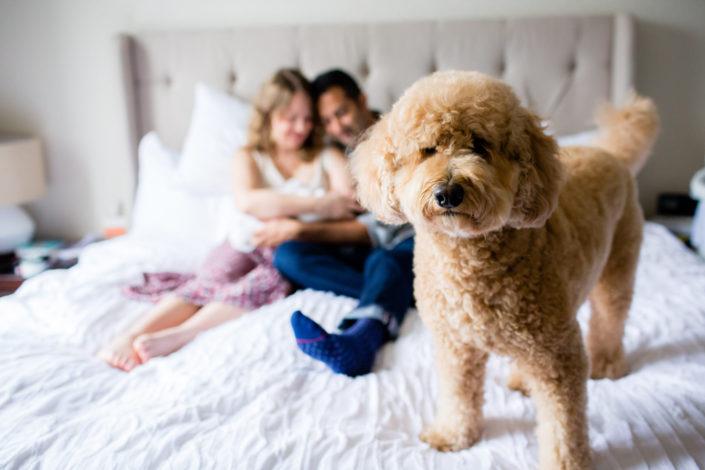 dog newborn photography