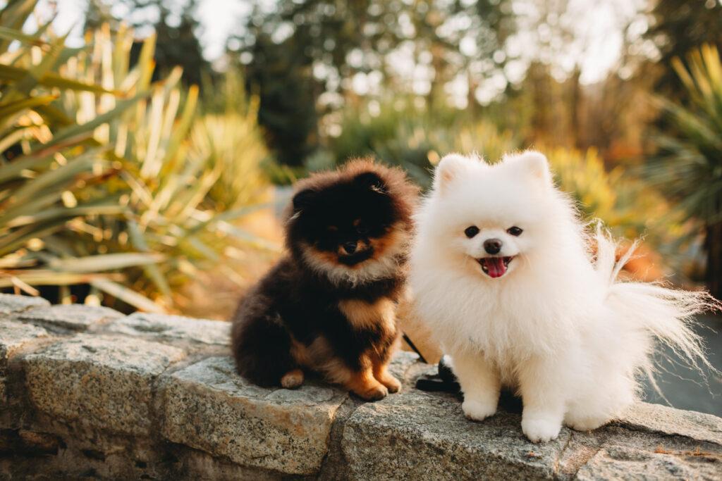 dog photographer seattle